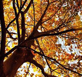 gk kreativ durchs Jahr: Herbstdekorationen