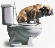 China's Pet Toilets