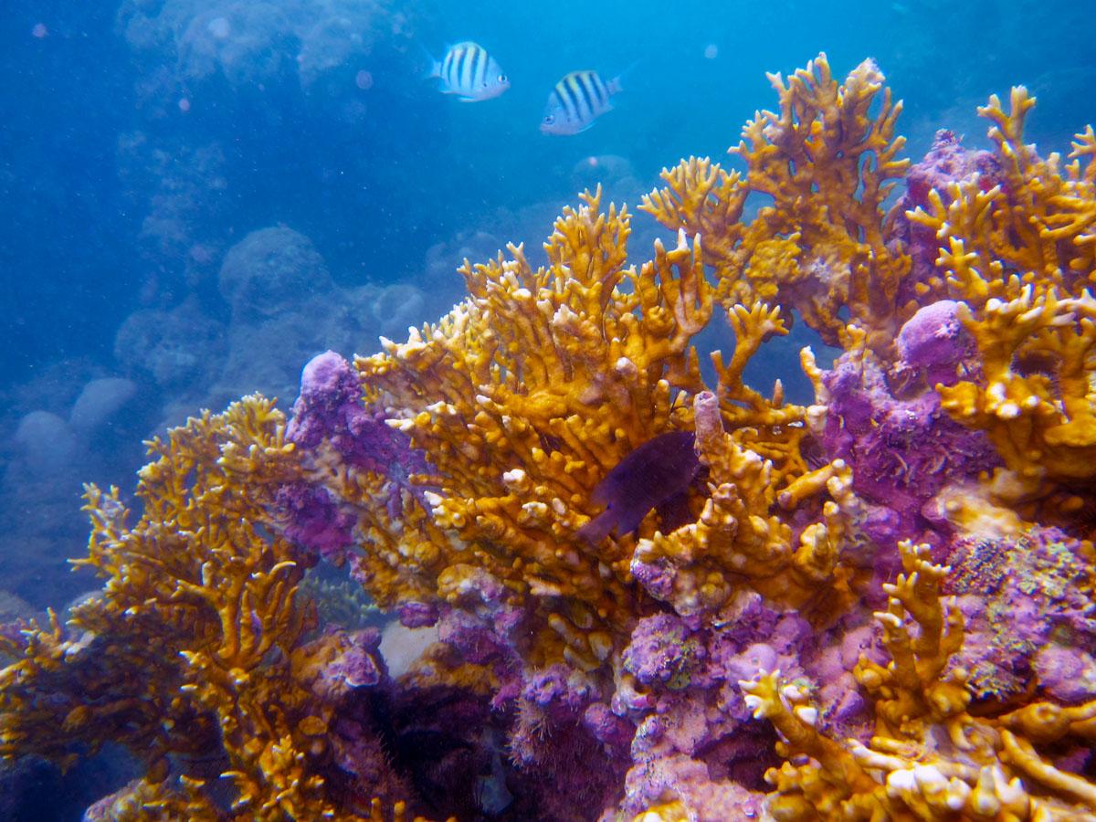 Pin tropicali fondali marini pesci coralli foto ajilbabcom for Immagini coralli marini