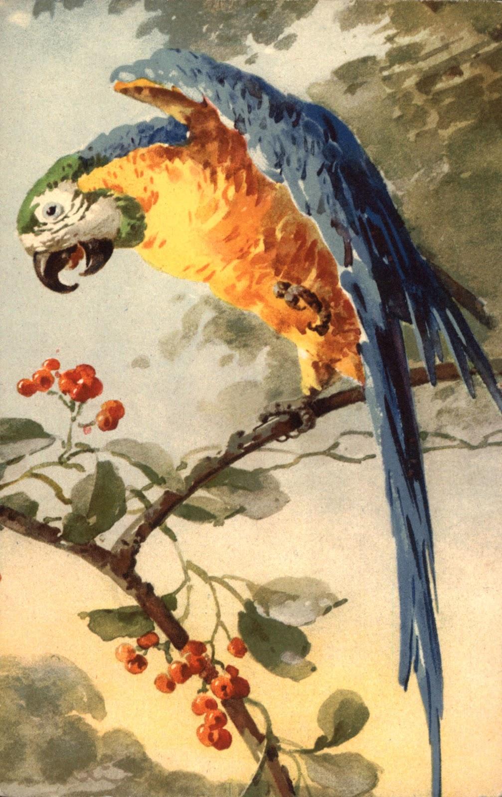 Catherine klein птицы часть 2