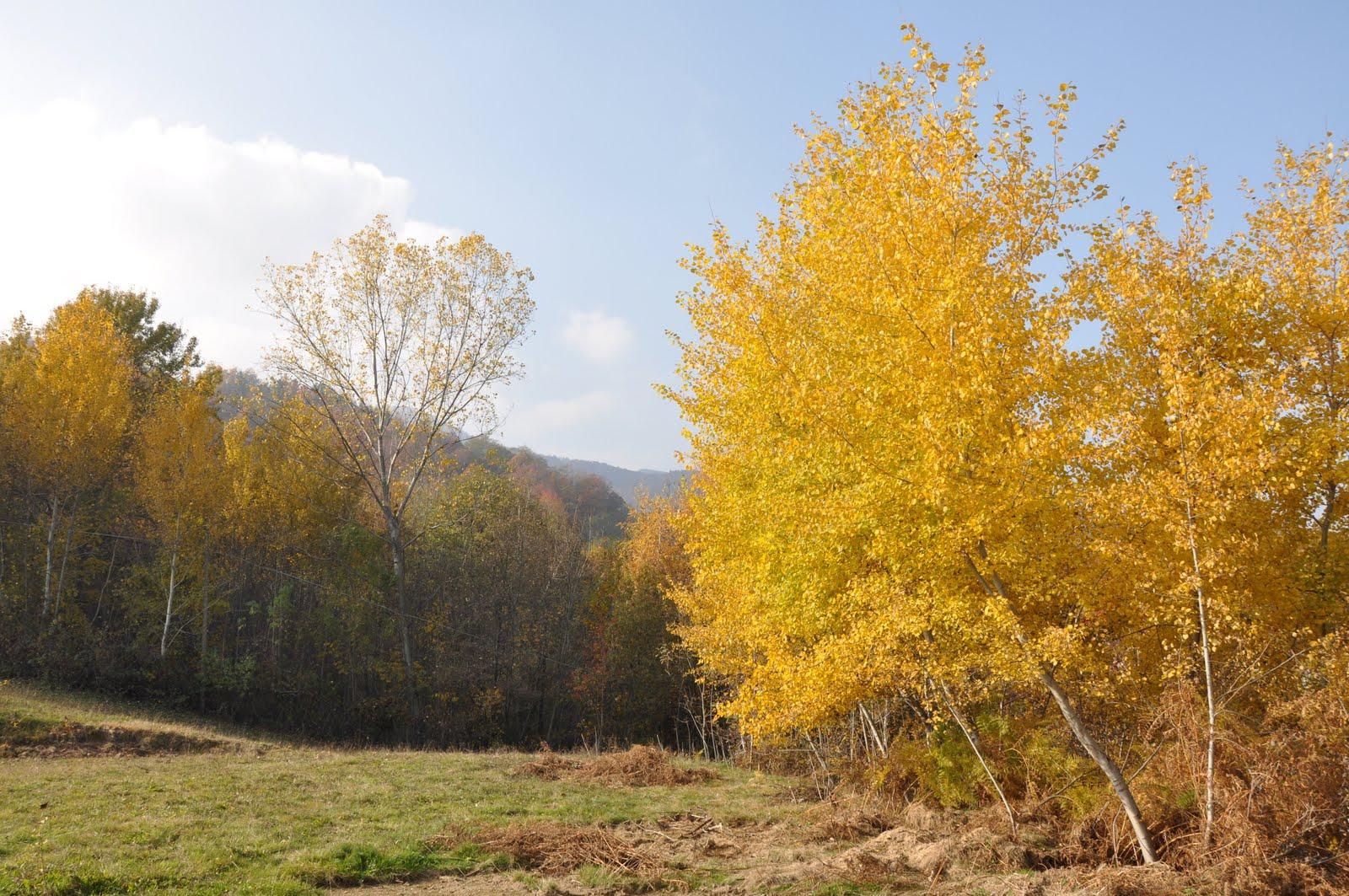 L Orto...e altri Maestri: I colori dellautunno