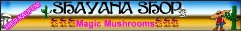 Zauberpilze bestellen und diskret Magic Mushrooms kaufen: