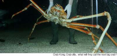 Crab Kong, Kepiting Terbesar di Dunia