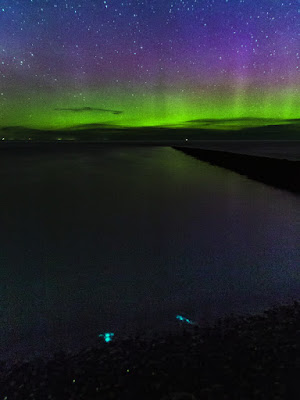 Bioluminescence and Aurora Borealis