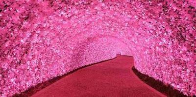 terowongan sakura