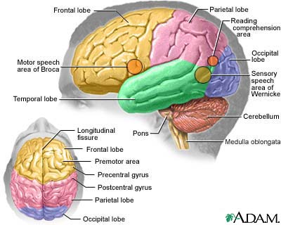 Supplements for brain photo 1