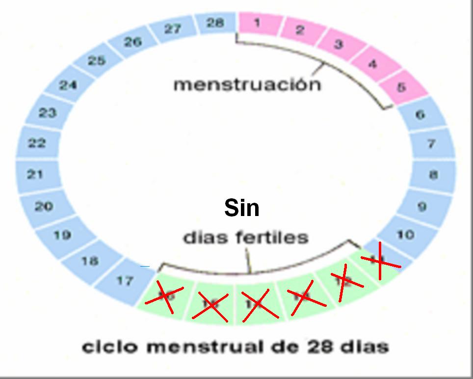 Éste es tu ciclo menstrual cuando NO usas anticonceptivos hormonales.