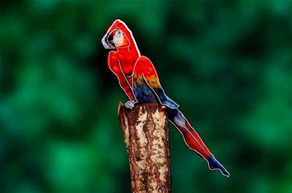 To you, the mystery hidden in this parrot Do you understand?