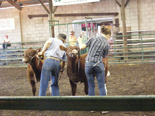 My dad and I showing Shorthorn cattle at the county fair