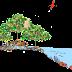 Keunikan Hutan Amfibi Mangrove