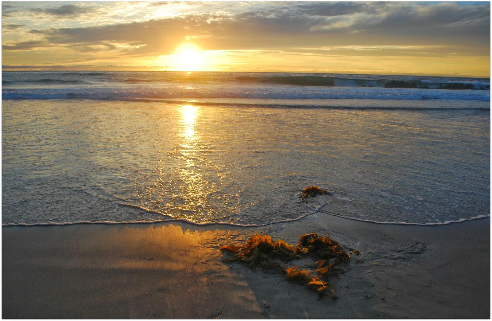 seaweed heart in Dana Point