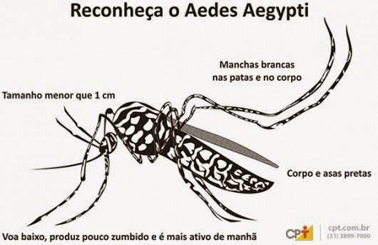Chuvas e Dengue