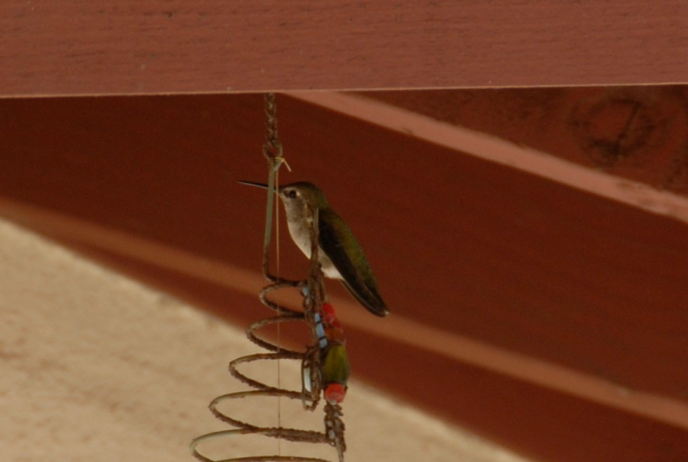 hummingbird perched on wind chime