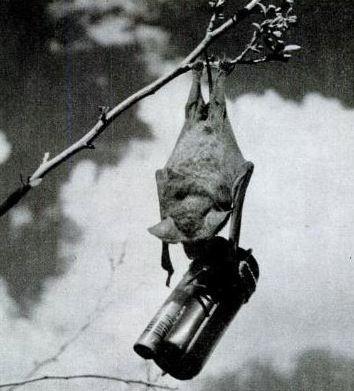 animales usados en la guerra