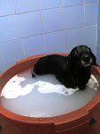 Minha banheira de Hidro