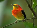Pássaro Distante