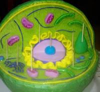 partes internas de la celula vegetal