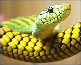Animals & Pets: Information about Snakes