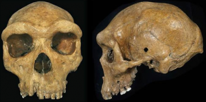 Mysteries That Rewrite Human History  Skull