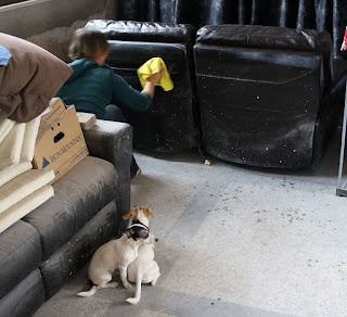Cleaning the sofas