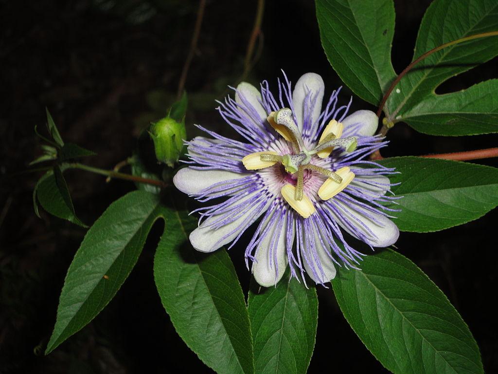 Flower s June 2012