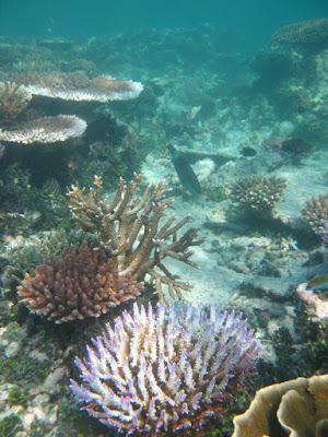 Tips Snorkeling