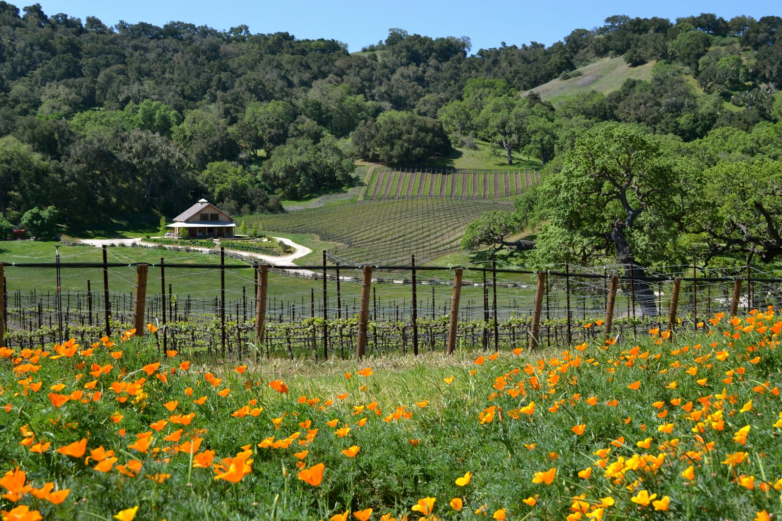 santa ynez Your official guide for visiting the danish village of solvang, ca and the santa ynez valley find hotels, events, wine tasting, craft beer, boutique shopping, international dining, and.
