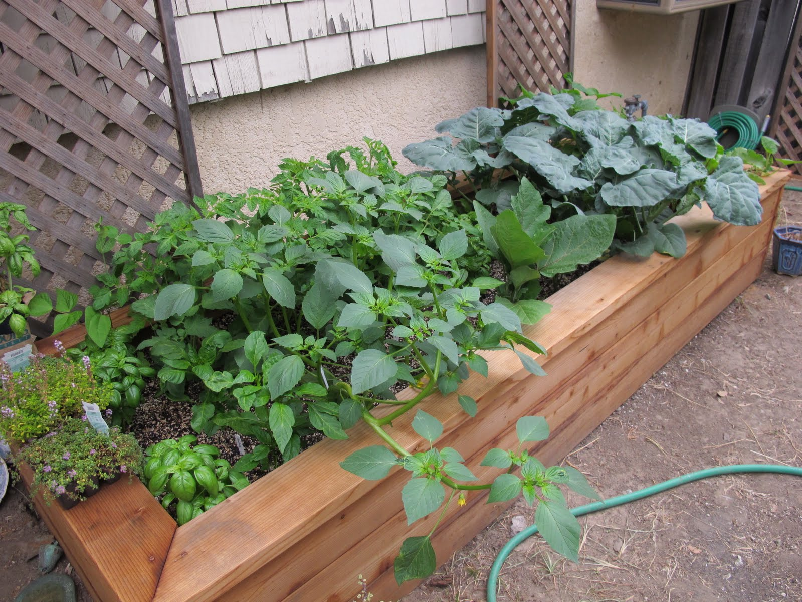 Healthful musings my beautiful raised garden bed for Beautiful raised beds