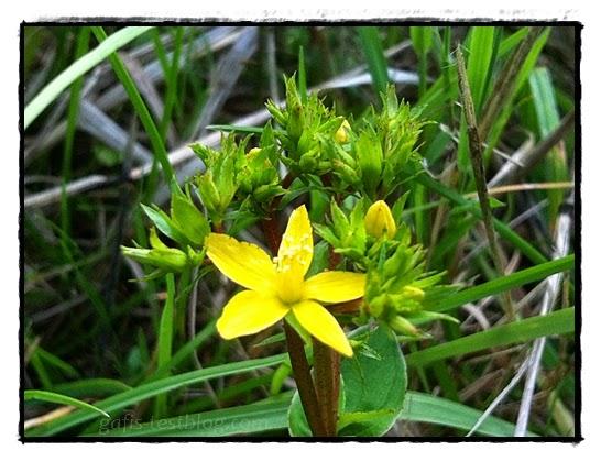 Wiesenblümchen in Gelb
