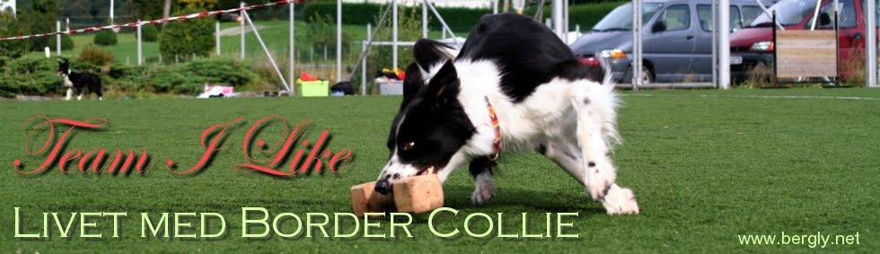 .: Team I Like :. Livet med Border Collie