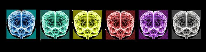 Cerebros de Biología Total