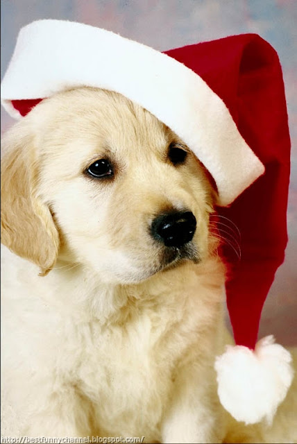 Funny Christmas puppy.