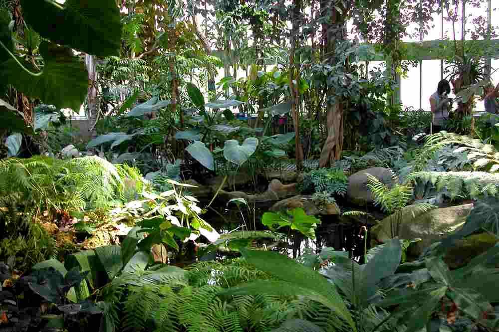 Paris archis jardin des plantes 3 for Plantes paris