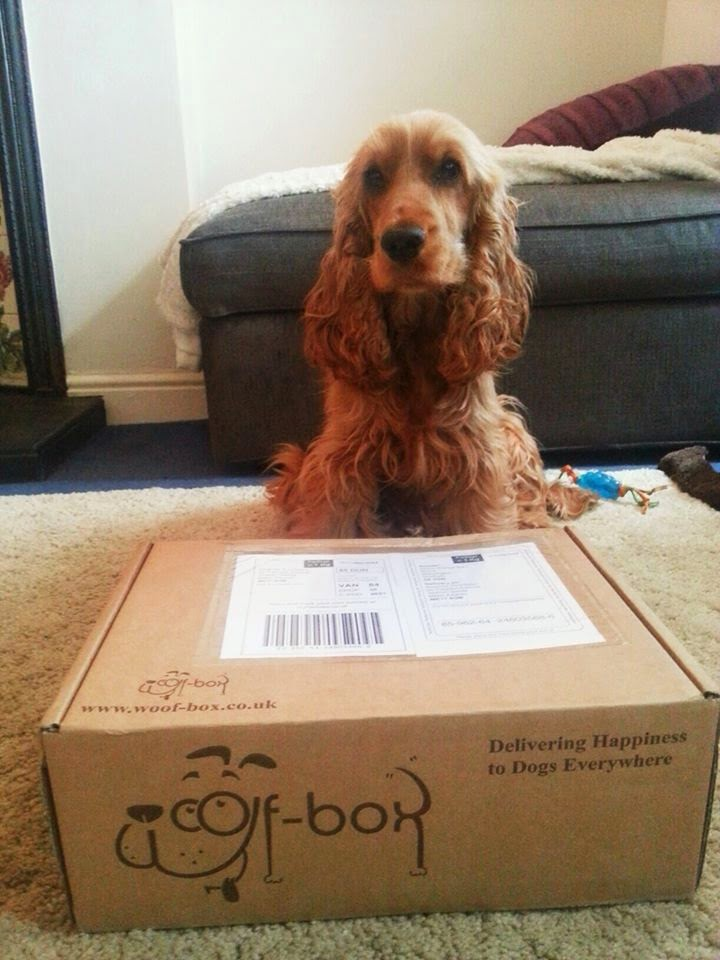 A Spaniel's Tail Woof Box Review