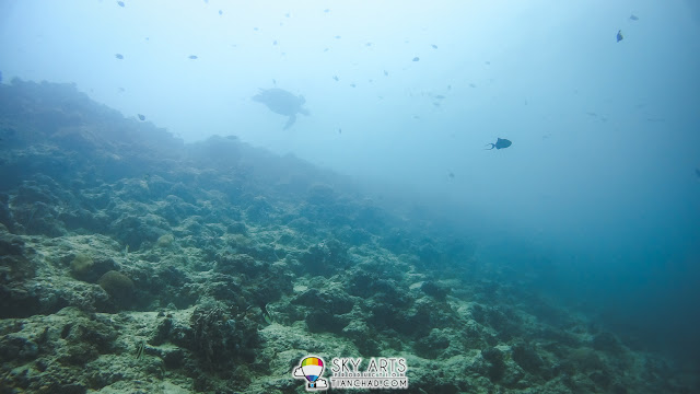 Sea turtle spotted from far swimming along the coral reef