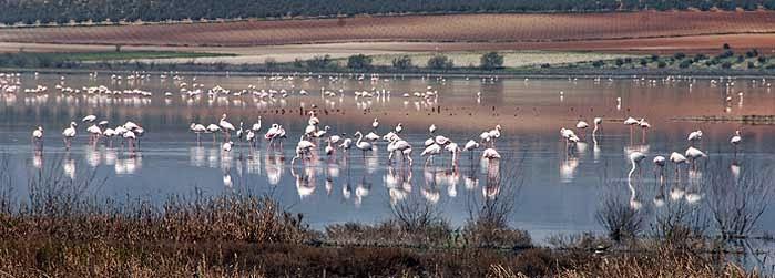 La Laguna de Fuentedepiedra