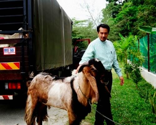 husam-kambing-selangor