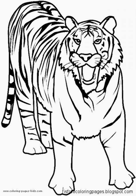 View Original Size Lion And Tiger Coloring Pictures Larakroemer Net