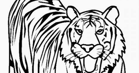 lions and tigers coloring - Coloring Pages Tigers Lions