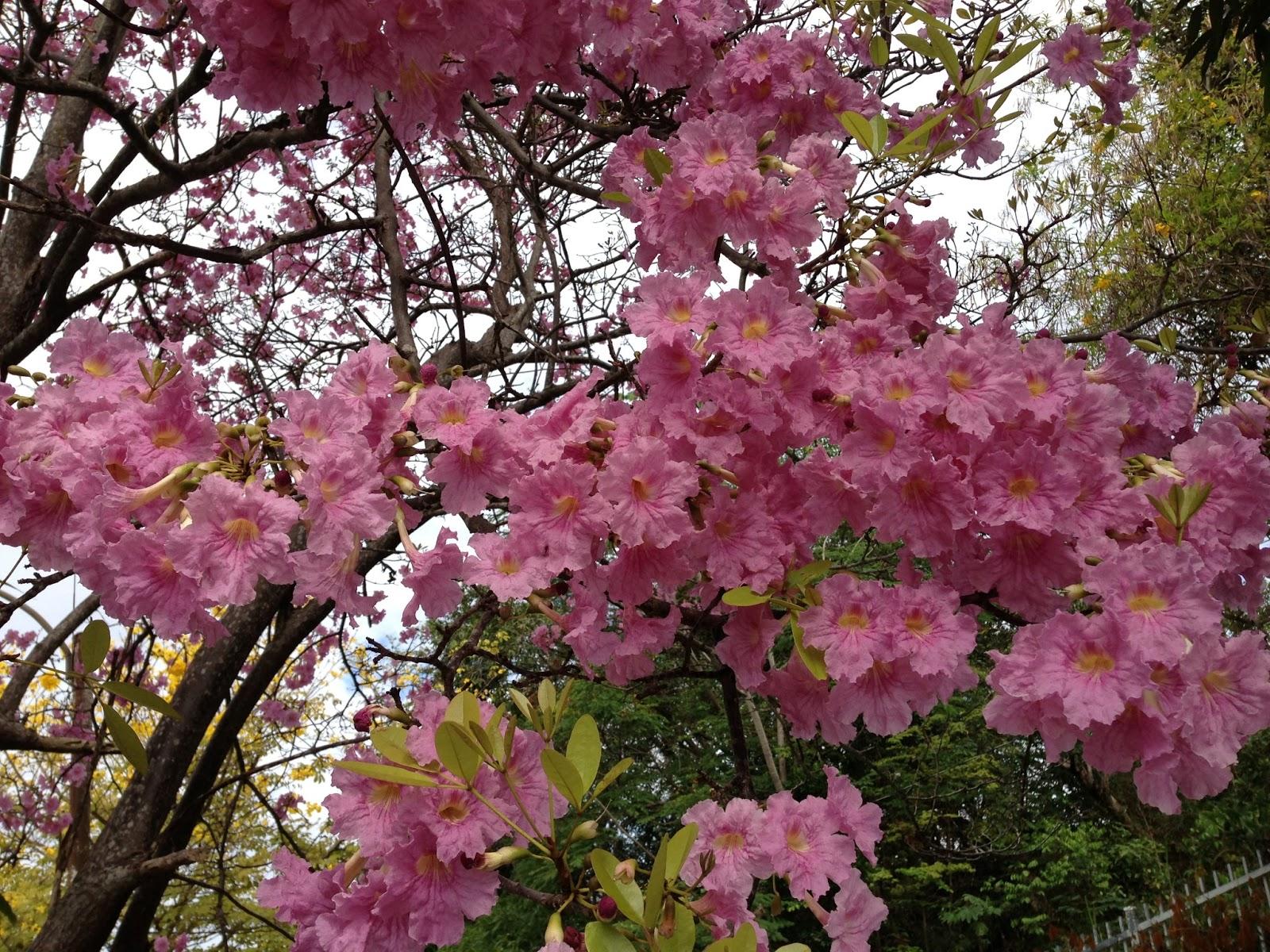 Bignoniaceae The Catalpa Tree Family Entomology Pr