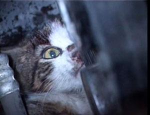 araba kaputunda falan kedi