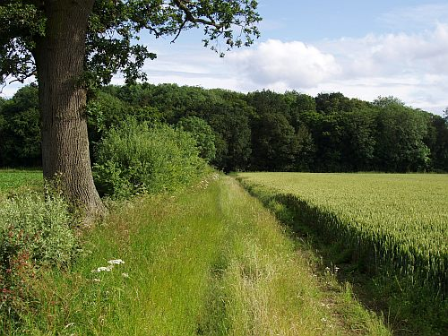 Rushall landscape 1 © Tim Holt-Wilson 2012