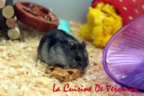 Homemade hamster treat 自製倉鼠零食