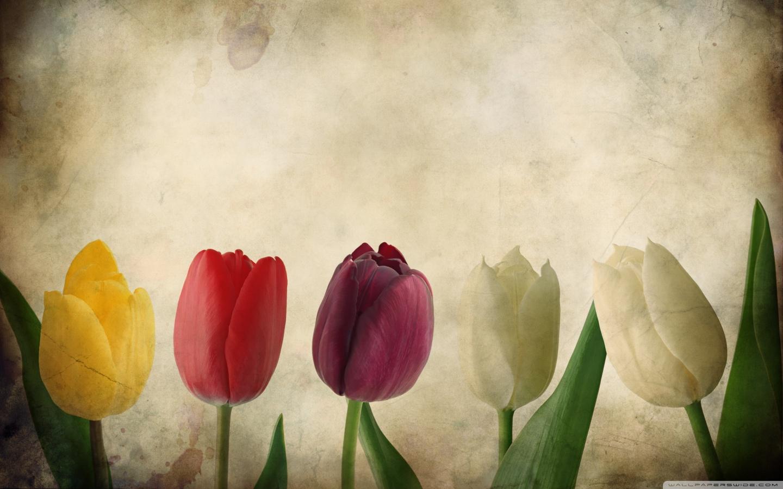 Nice Vintage Flower Wallpaper Desktop Background (1440 x 900 )