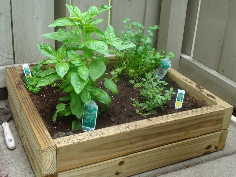Easy Techniques for Apartment Container Gardening | Garden Park