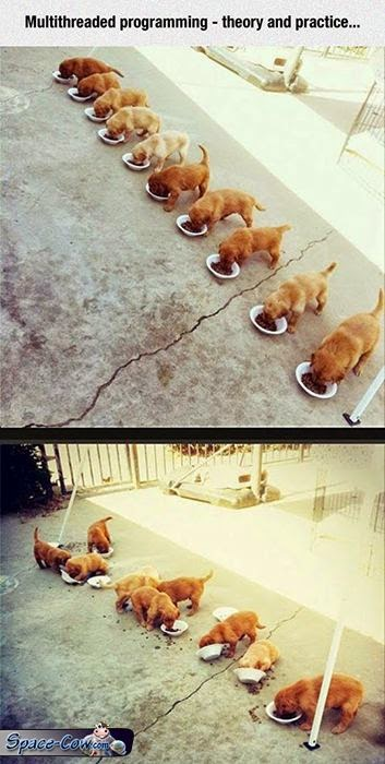 funny cute puppies picture