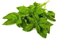 Tips diet dengan daun kemangi