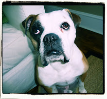 This Blog Has a Bulldogge, Hurley