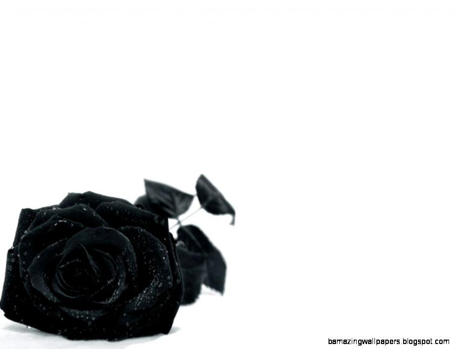 4945 Black Rose Cool Wallpaper