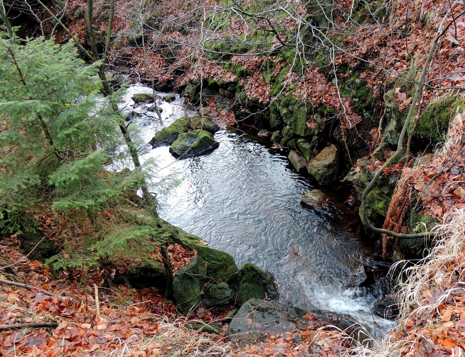 DEN PRO TEBE: Lesní tůň zastavení ticha a míru lesa i tekoucího potůčku